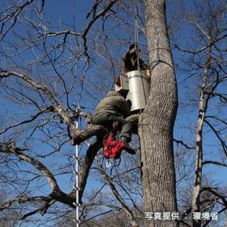 巣箱を木にしっかりと固定する