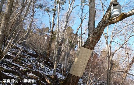 木の根元に滑りやすいトタンを巻く