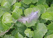 地面に落ちた羽